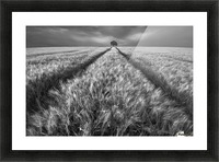 Alone Picture Frame print