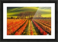 vine-growing Picture Frame print