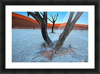 Ancient trees in the Vlei Picture Frame print