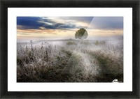 Frosty Morning Picture Frame print