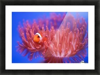 Finding Nemo Picture Frame print