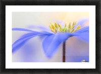 Pure ... Picture Frame print