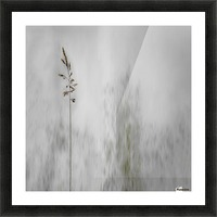 blade of grass Picture Frame print