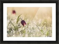 Morningdew Picture Frame print