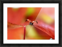 Ladybird in autumn Picture Frame print