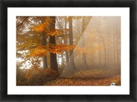 Edge of the woods Picture Frame print