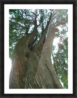 The Tree Picture Frame print
