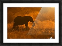 Golden Elephant in Savute Picture Frame print
