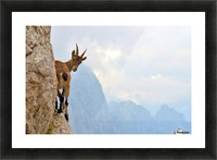 Suspense Picture Frame print