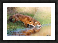 Thirsty Picture Frame print