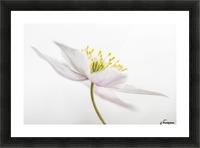 Nemorosa Picture Frame print