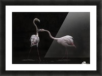 Not all is rosy Picture Frame print