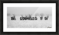 Oryx in the rain Picture Frame print