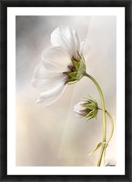 Cosmos Picture Frame print