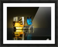 Butterfly Drink Picture Frame print
