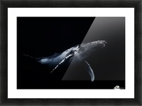 Black & Whale Picture Frame print