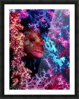 Coral Hind Picture Frame print