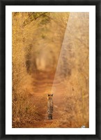 The Tiger in  the Tunnel Picture Frame print