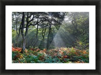 Dewerstone Woods Picture Frame print