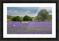 Emsworthy bluebells Picture Frame print