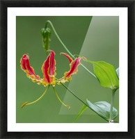 Flame Flower  Picture Frame print