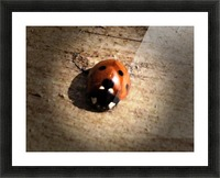 Lady Bird Bug Picture Frame print