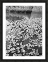 Weeping Lillies Picture Frame print