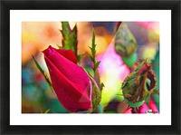 Rosebud Picture Frame print