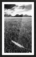 Feather in the Grass Picture Frame print