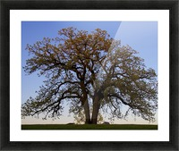 The Wishing Tree Picture Frame print