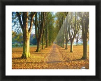 Autumnal Avenue Picture Frame print
