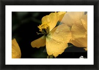 Butterfly Flower Picture Frame print