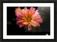 Dahlia  Picture Frame print