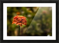 The Dreamer Picture Frame print