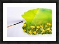 Paintbrush Outdoor Flower Flowers Sunlight Picture Frame print