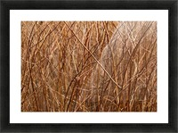 Abstract Background Branch Brown Color Flora Picture Frame print
