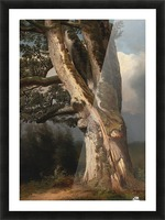 An oaktree trunk Picture Frame print