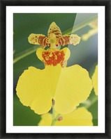 orchid3 Picture Frame print