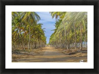 Earth Topical Road Porto Galinhas Brazil 2 Picture Frame print