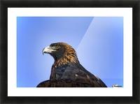 Golden Eagle Picture Frame print