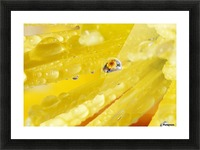 Yellow Flowers Reflected In Dew Drop Picture Frame print
