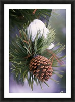 Early Snow On Pine Tree Branch With Pinecone Picture Frame print