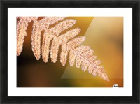 Frost On A Fern Leaf Picture Frame print