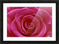 Rose Blossom Picture Frame print