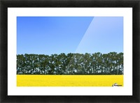 Canola Field And Trees Picture Frame print