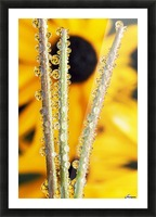 Reflection In Dew Drops Picture Frame print
