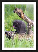 Porcupine Baby Eating Flower Picture Frame print