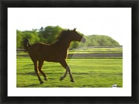 Horse Galloping Picture Frame print
