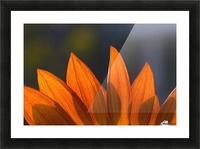 Sunflower Close-Up Picture Frame print