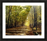 Tree Lined Road In Autumn Picture Frame print